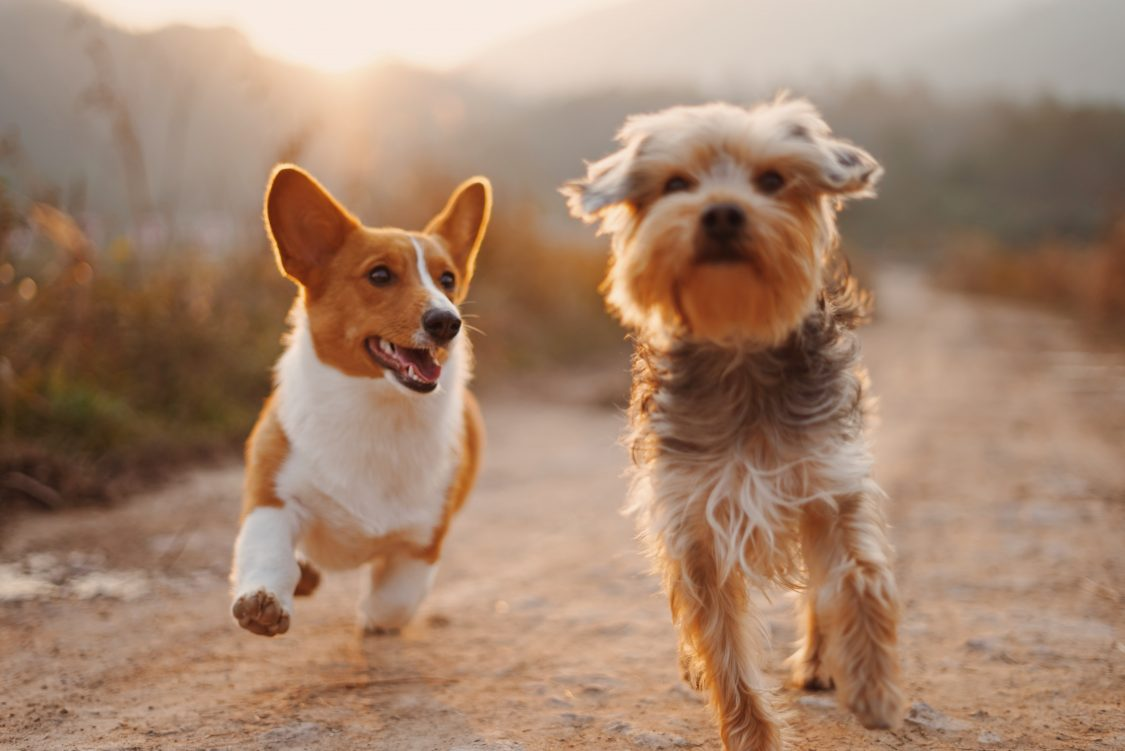 Zdrava hrana za pse je narejena le iz najboljših sestavin